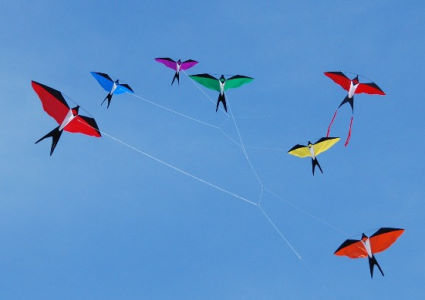 bird-kites-photo-62015